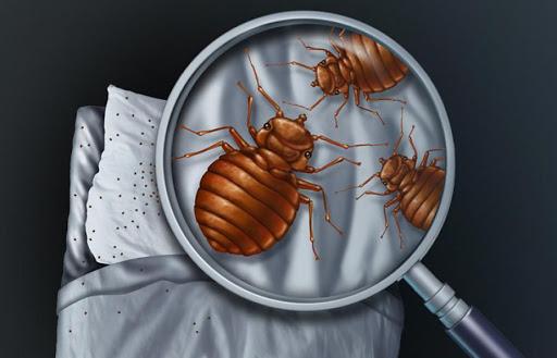 Présence de parasites ou de nuisibles dans le logement : Qui du bailleur ou du locataire doit intervenir ?